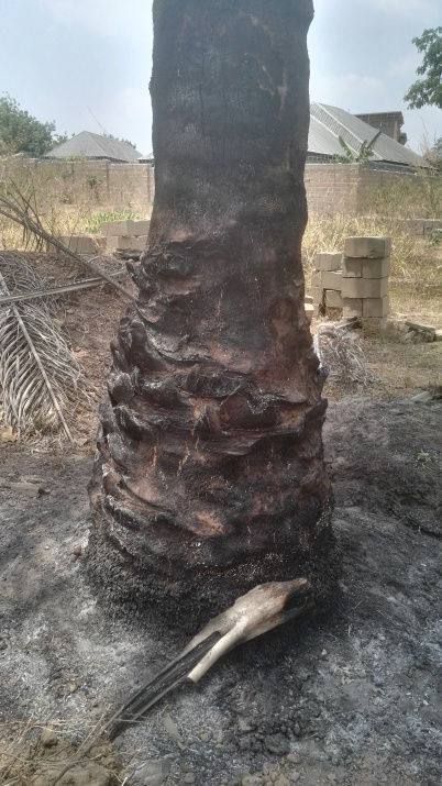 Palms set on fire by herdsmen